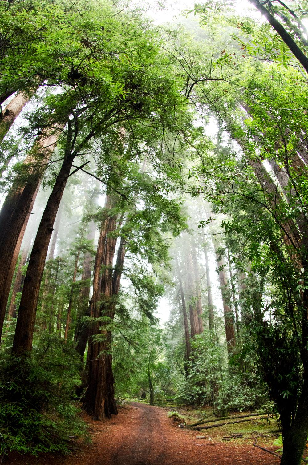 Misty Forest.jpg