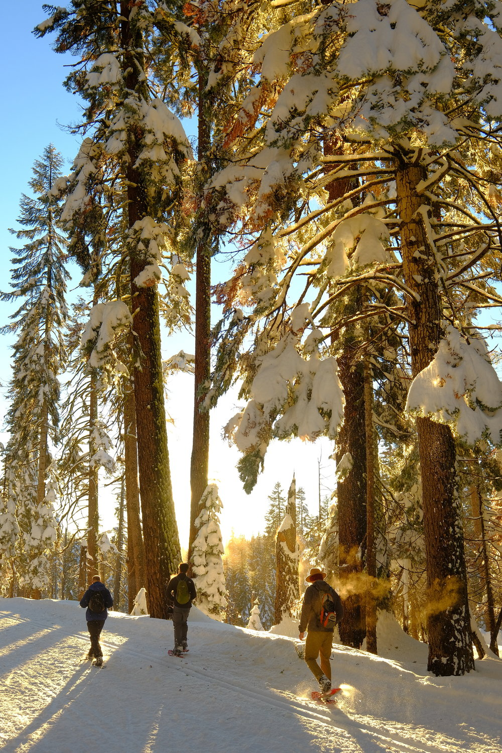 Sunset Snow Trail.JPG