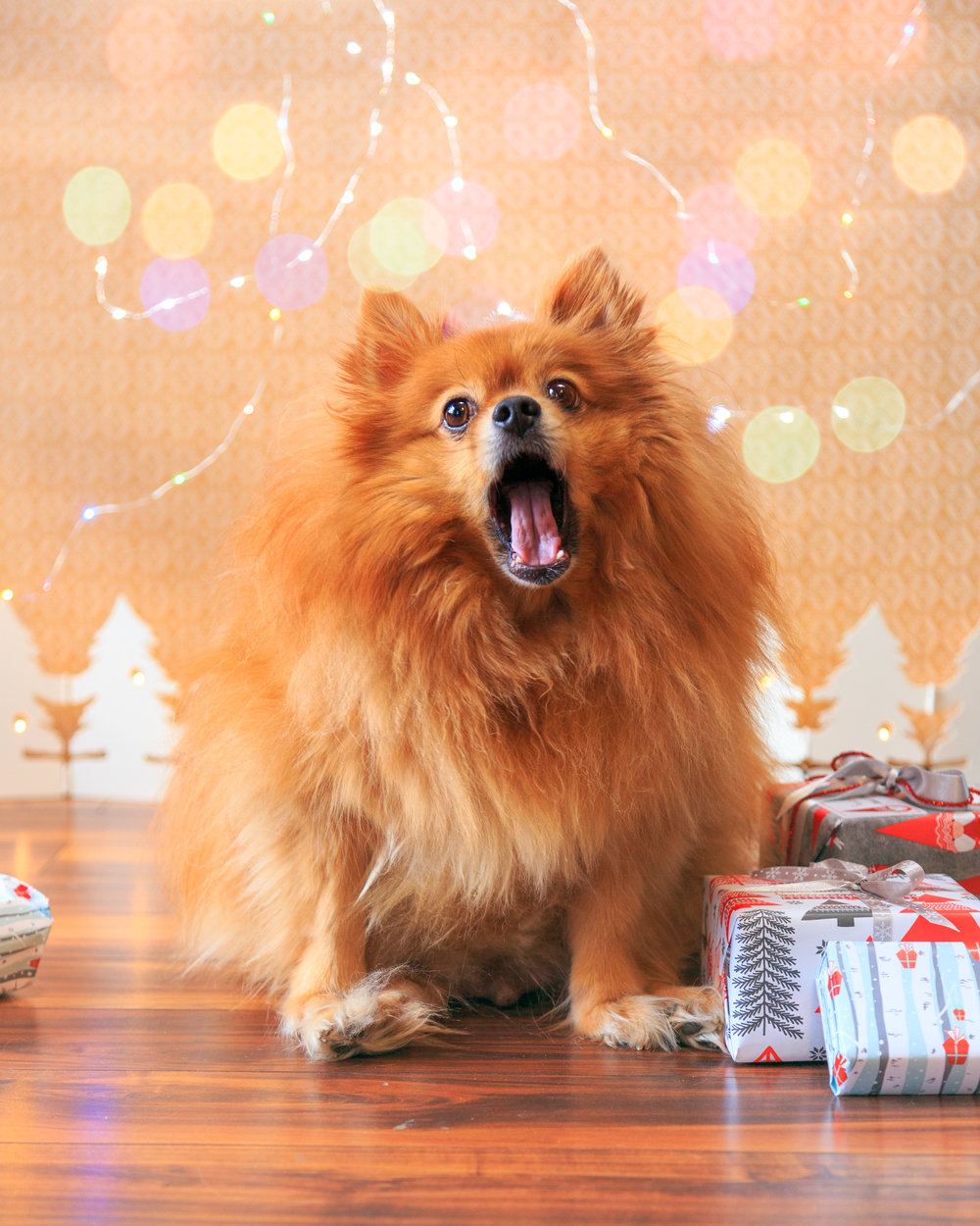 Pet Christmas shoot!