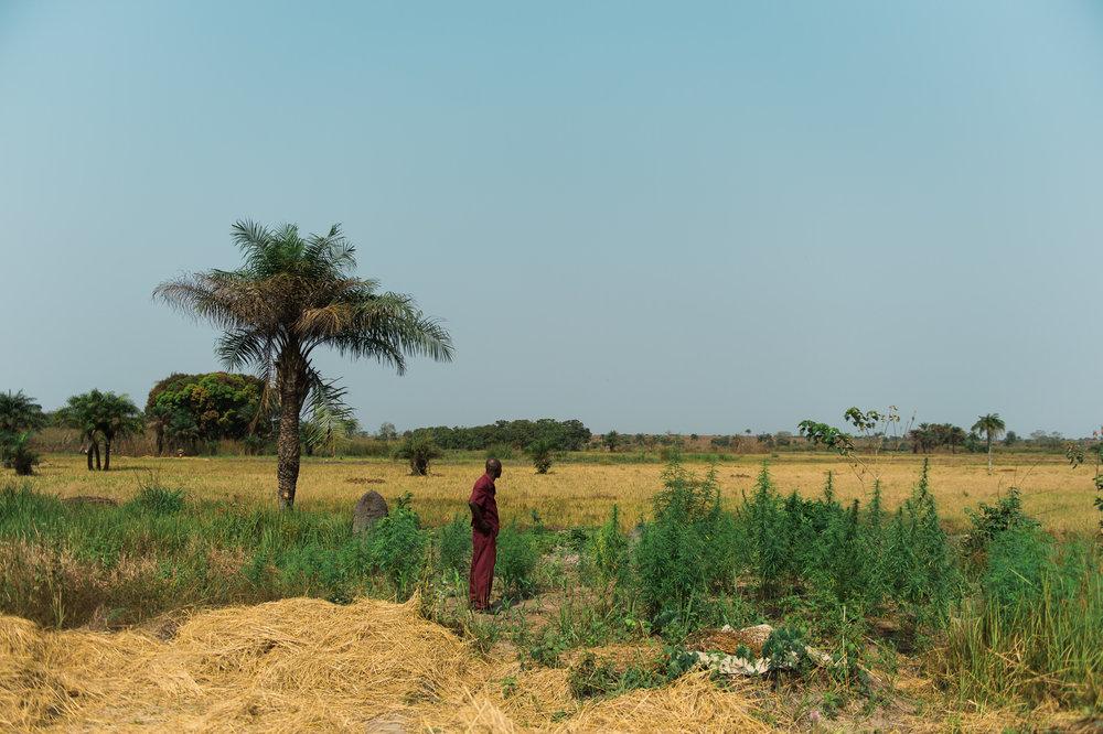 Africa-3.jpg