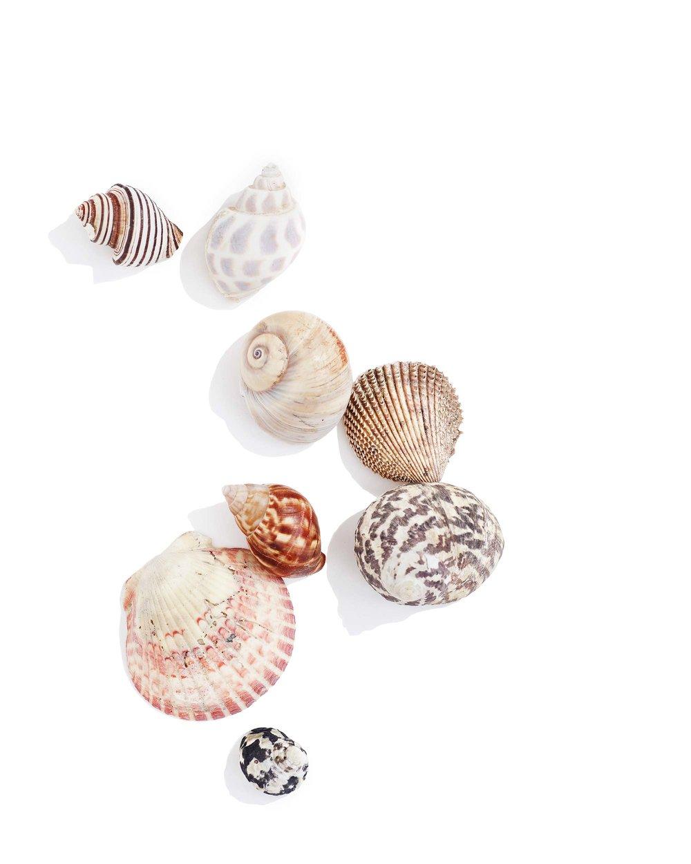 Rocks-Shells_0040.jpg