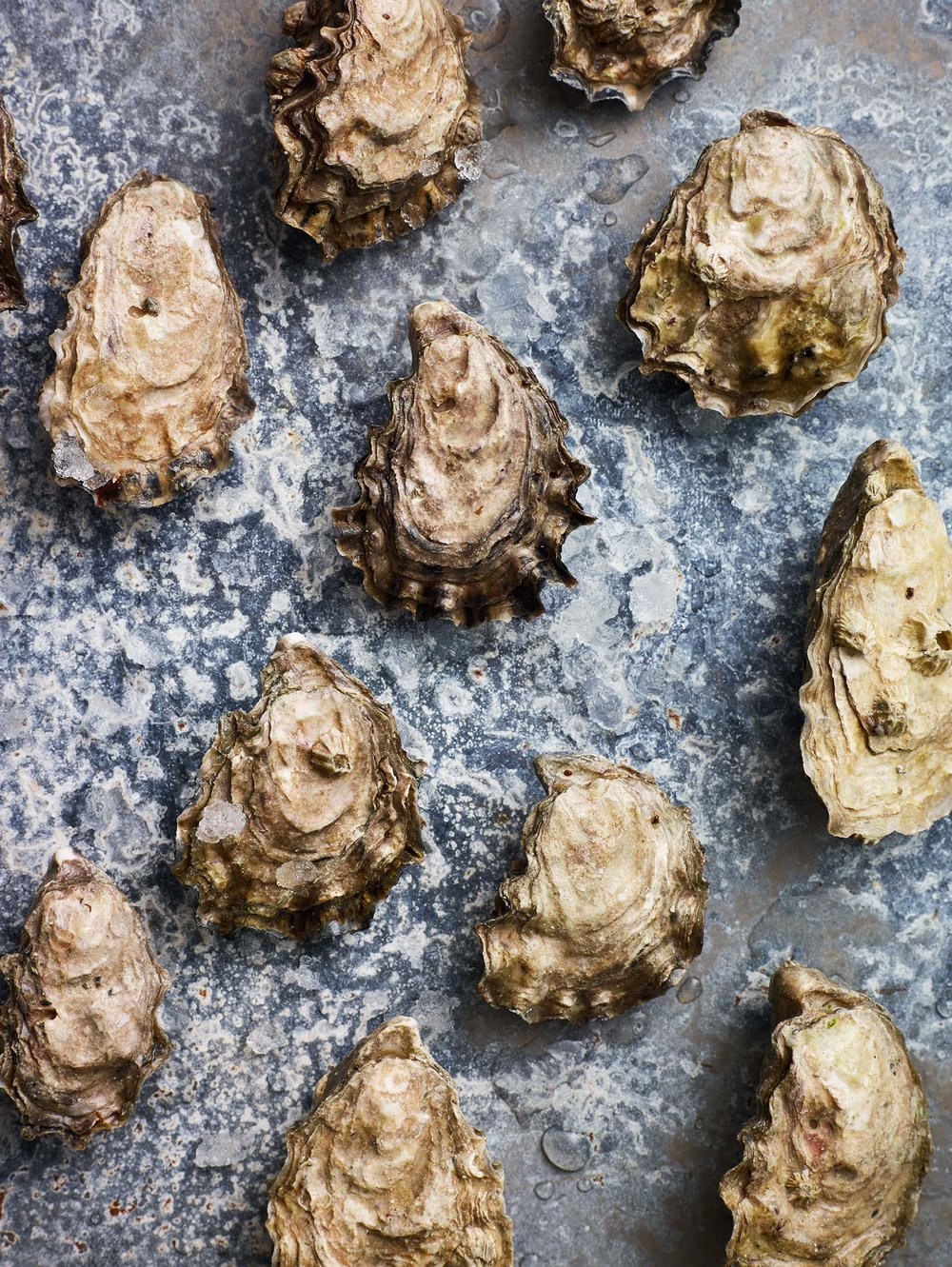 Oyster-Party_0243.jpg