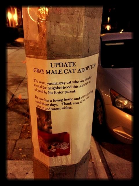 Cat Update.jpg
