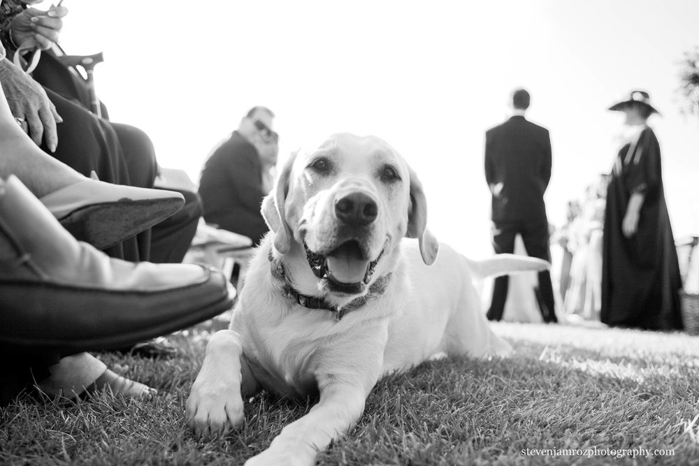 dog-at-wedding-ceremony-photographer-steven-jamroz-0718.jpg