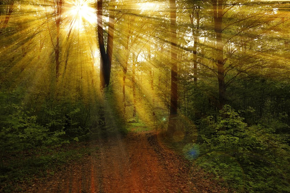 Arise and Awake! - Your daily awakening practice for living a more vibrant life!