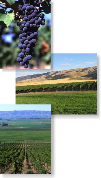 vineyard_collage_350x615.jpg