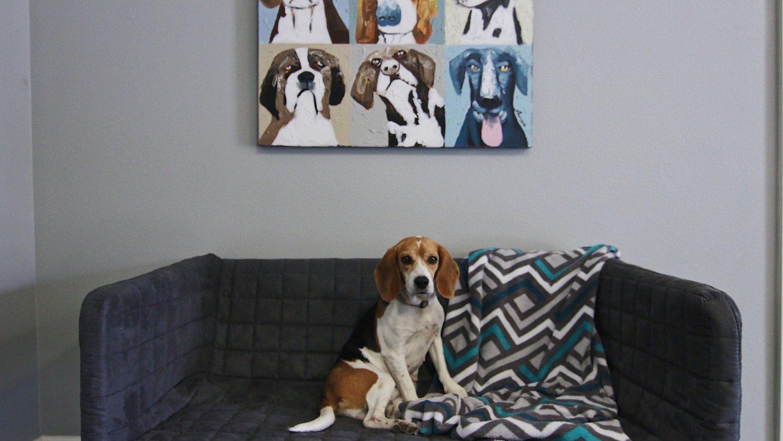 Hounds hideaway dog boarding solutioingenieria Gallery