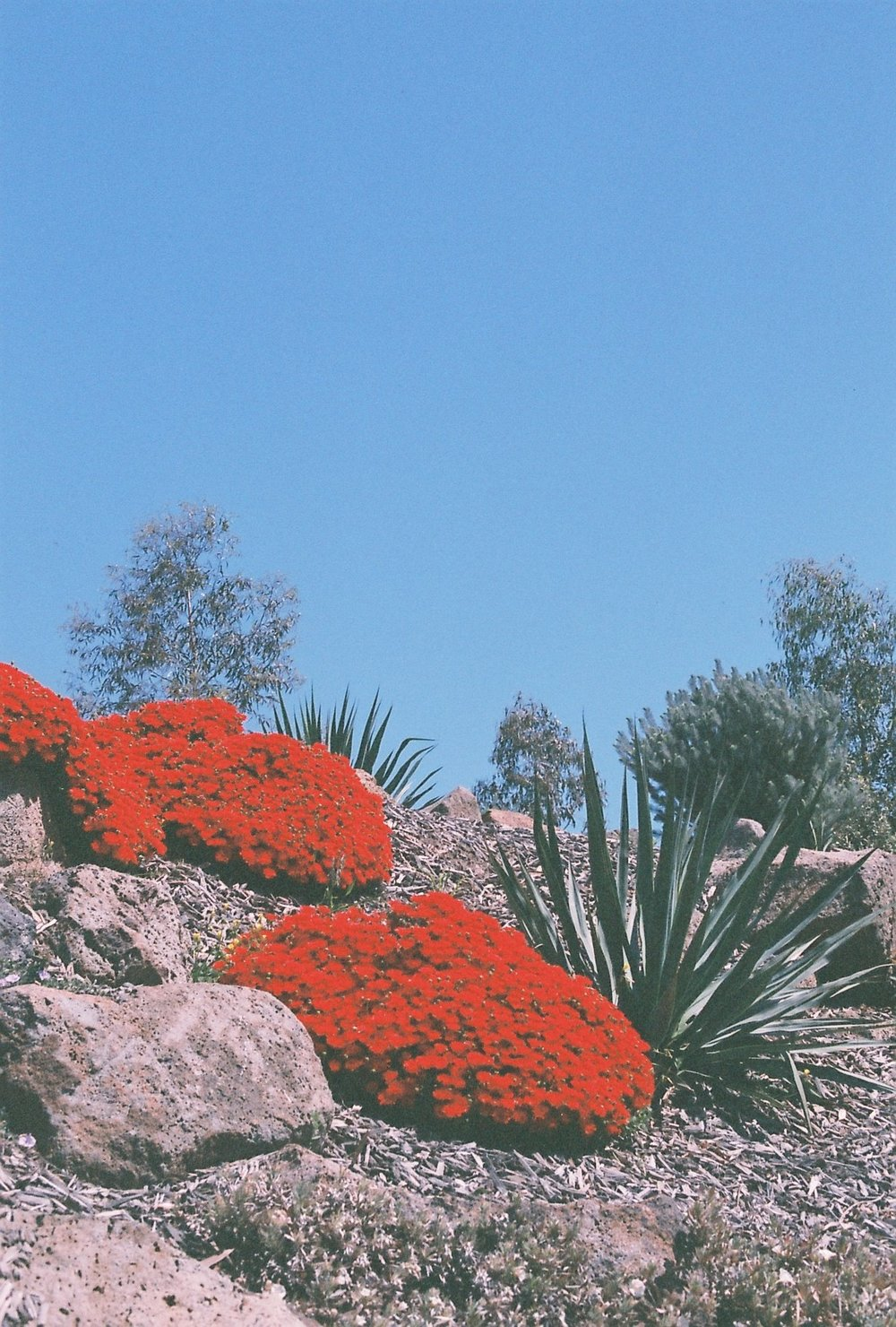 photography suburb melbourne cacti