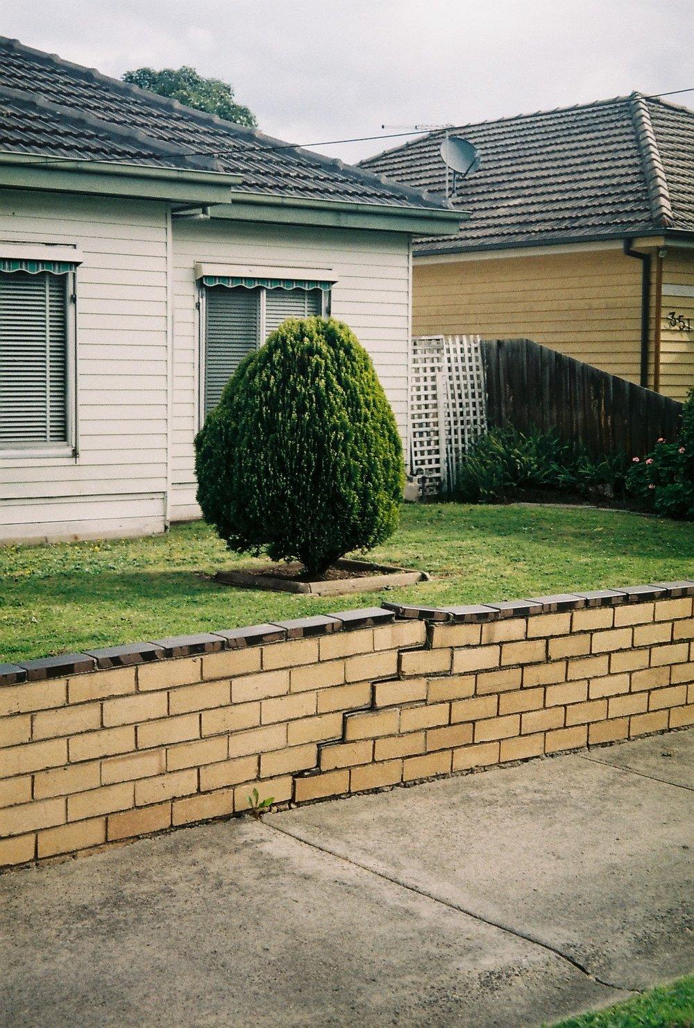 photography suburb melbourne coberg tree garden