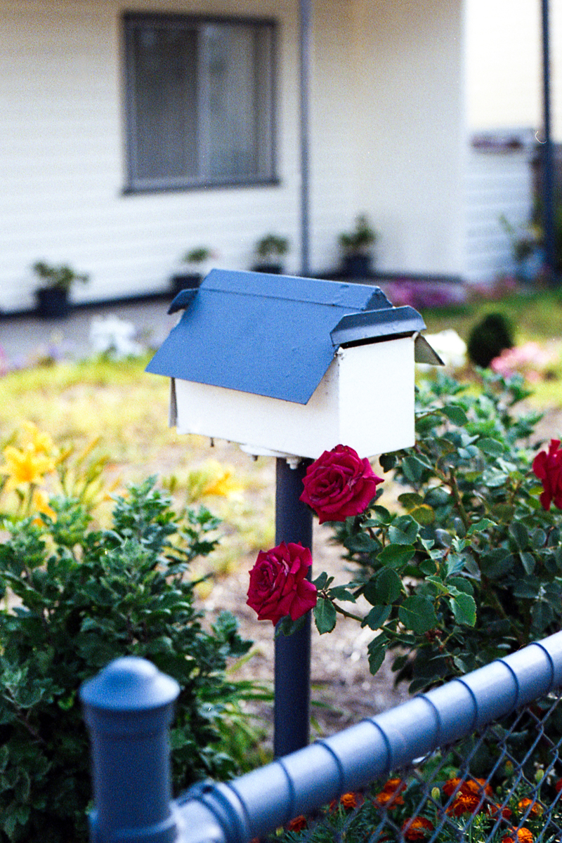 photography suburb melbourne roses mailbox