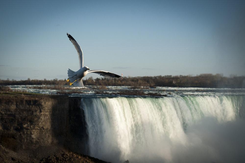 NiagaraFalls2012 425.JPG