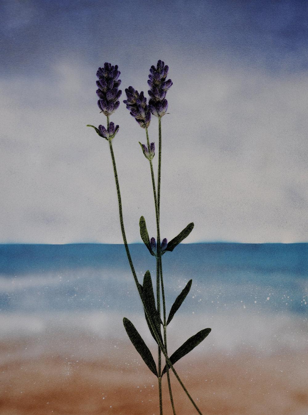 LavenderoceanBreath-01.jpg