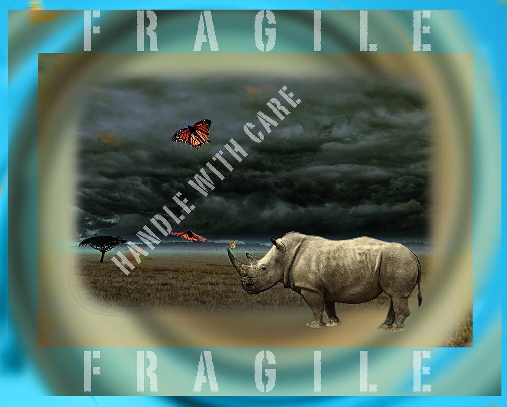 HANDLEWCAREweb2WhiteRhiniButterfly_Fragile.jpg