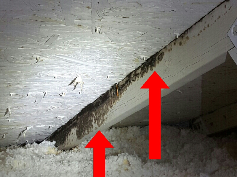 Mold growth observed in attic trusses due to a bathroom exhaust fan venting into the attic. All exhaust fans, dryer vents and flue pipes must vent to the exterior.