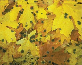 With Autumn in the air it's common to have higher mold levels outside. Let's keep mold outside with a complete mold inspection of your home.