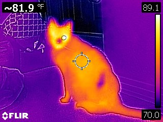 Infrared thermal imaging allows me to see temperature anomalies and detect issues not visible to the naked eye. Moisture intrusion, overheated electrical circuits, missing insulation and pest infestations are just a few examples.