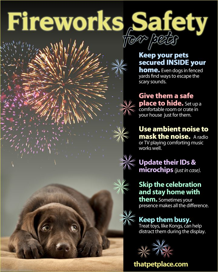 New Year's Eve is a huge day for run away pets. Keeping your pets indoors with TV, music or loud fans on will help keep them calm and safe.