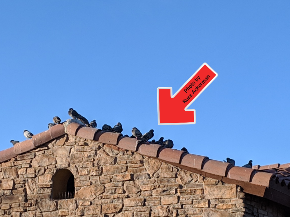 Does this look like your roof? It's important to keep pigeon under control to minimize roof damage and health hazards from bird waste.