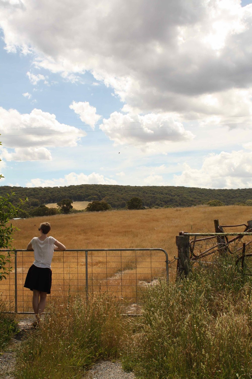 Countryside, NSW, 2014 ©