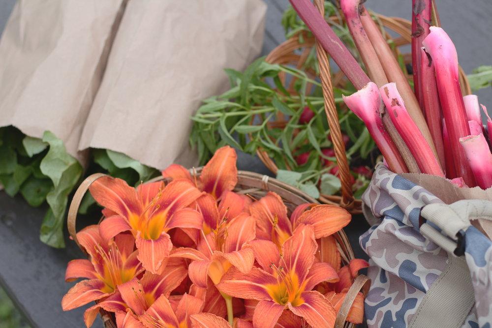 Récolte du jardin d'un ami : les tiges de rhubarbe qui ont servies à l'écheveau vert pistache précédent