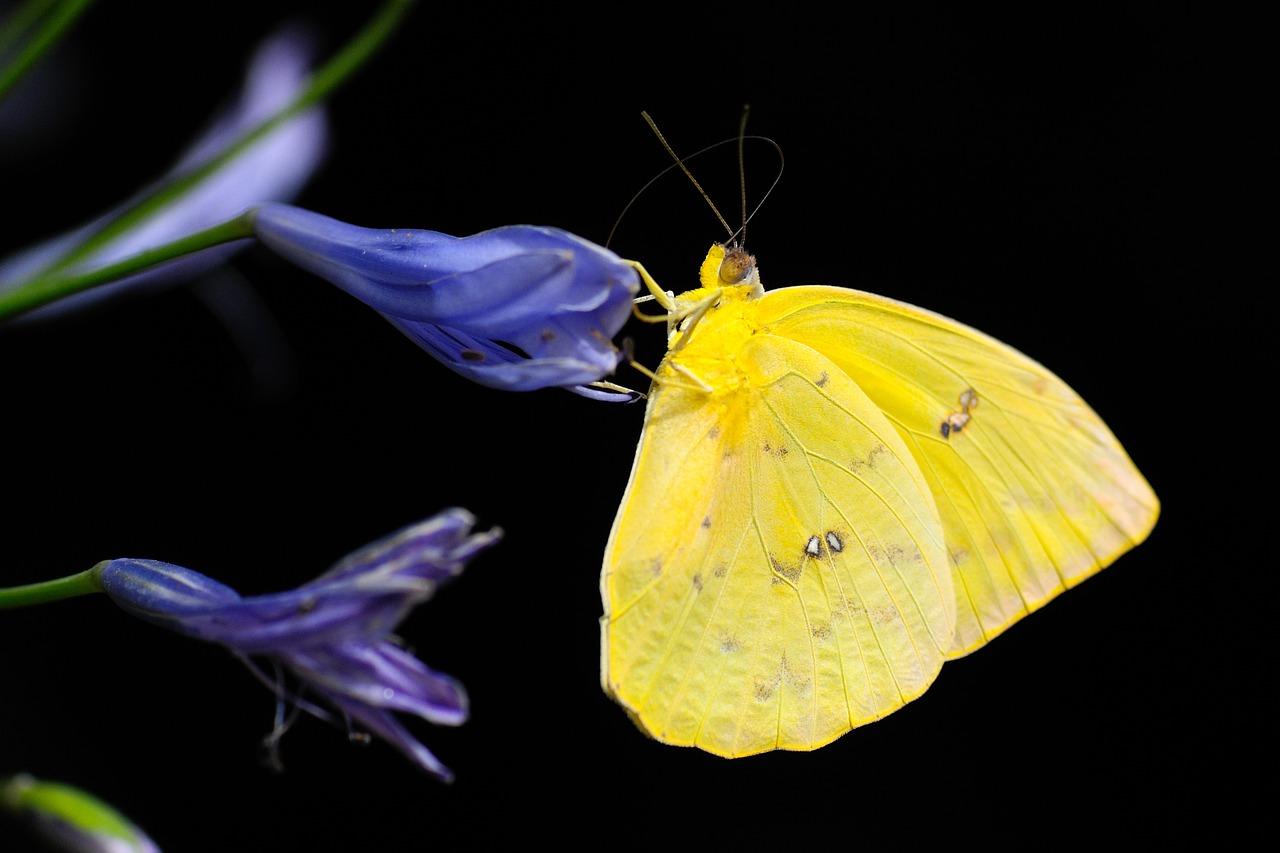 butterfly-1413678_1280
