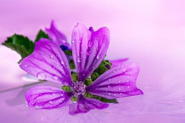 One Purple Flower.jpg