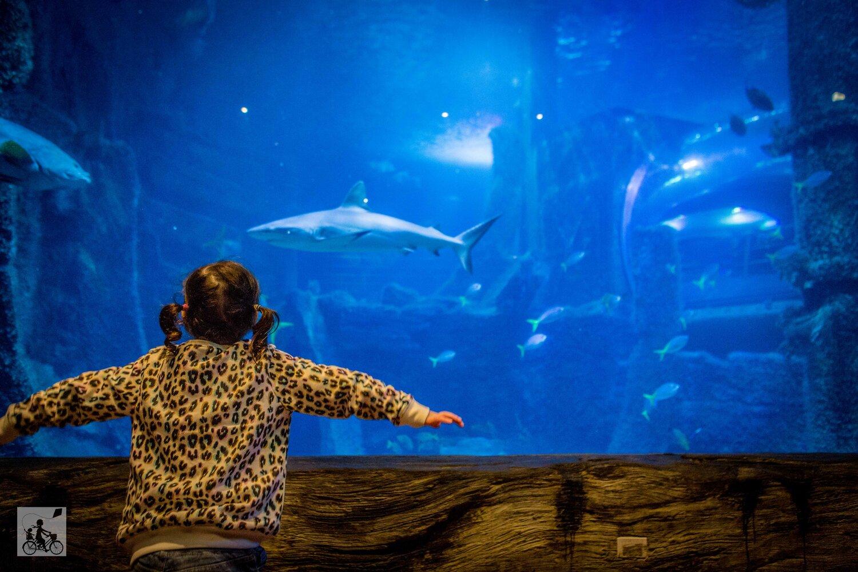Sealife Holiday Camp Junior Shark Keeper Melbourne Aquarium Mamma Knows Melbourne