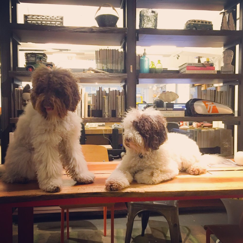 Meet Sparky and Elmo (The real bosses)! Follow them at their Instagram @sparky_and_the_mo