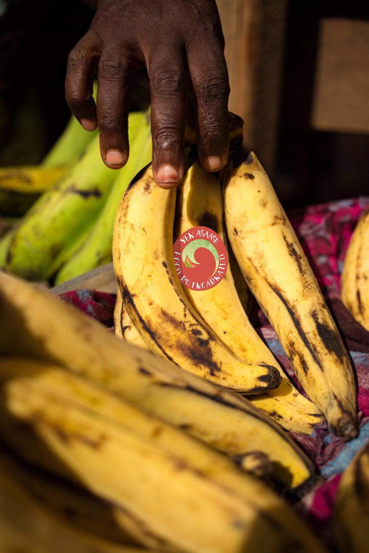 BananaWSeal copy.jpg