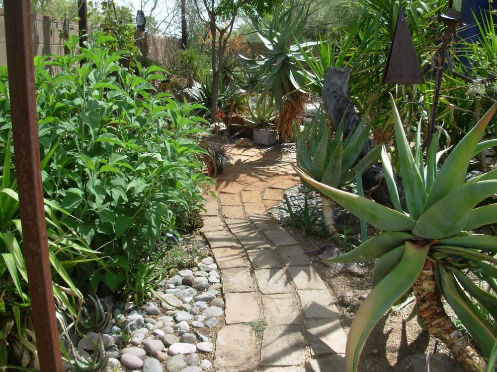 valley-garden-center-phoenix-succulent-walking-path.jpg