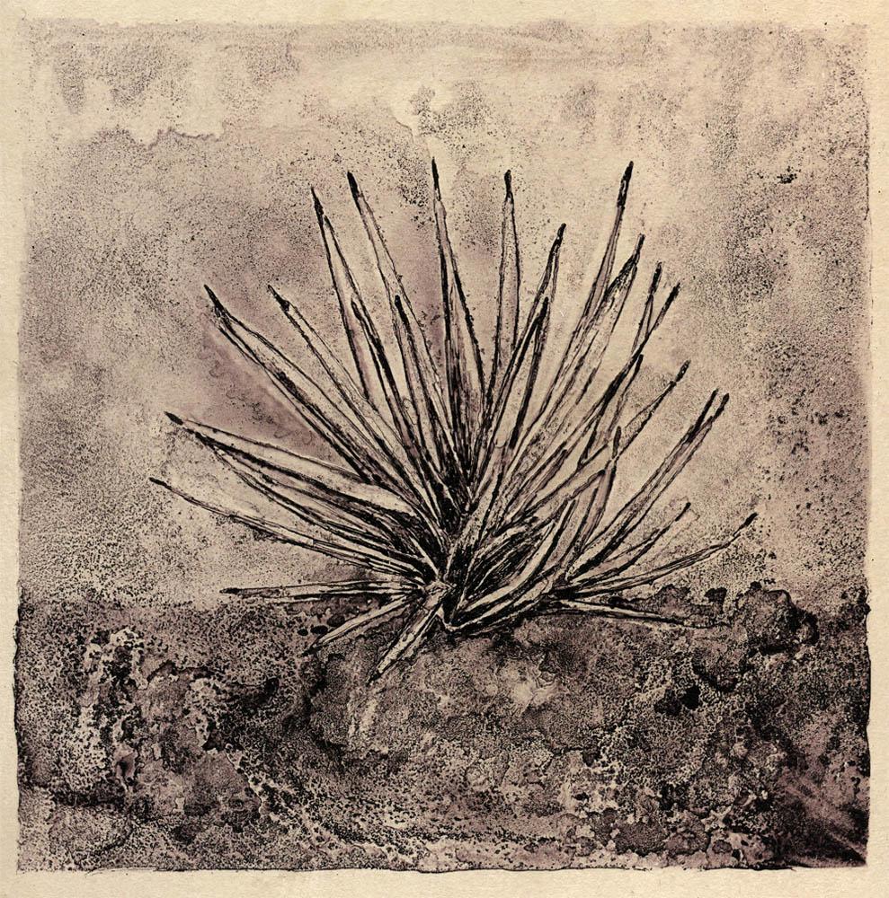 Yucca, Beloved