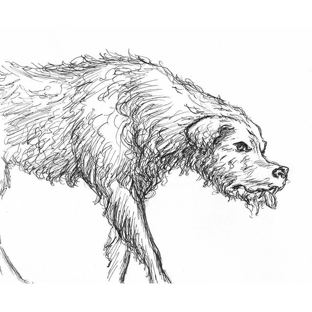 Quick drawing inspired by an M.E.N article about a rabid dog in Victorian Manchester #dog #hound #illustration #art #drawing #inkdrawing #inkart #pen #penandink #sketch #sketchbook #gothic #victorian #inkartist #instagood #blackandwhite #inklouvre #inkfeature #blackworknow #blackworkillustrations #duende_arts_help #ink #historical #illustrator #handdrawn #manchester #penonpaper #article #spooky #hair