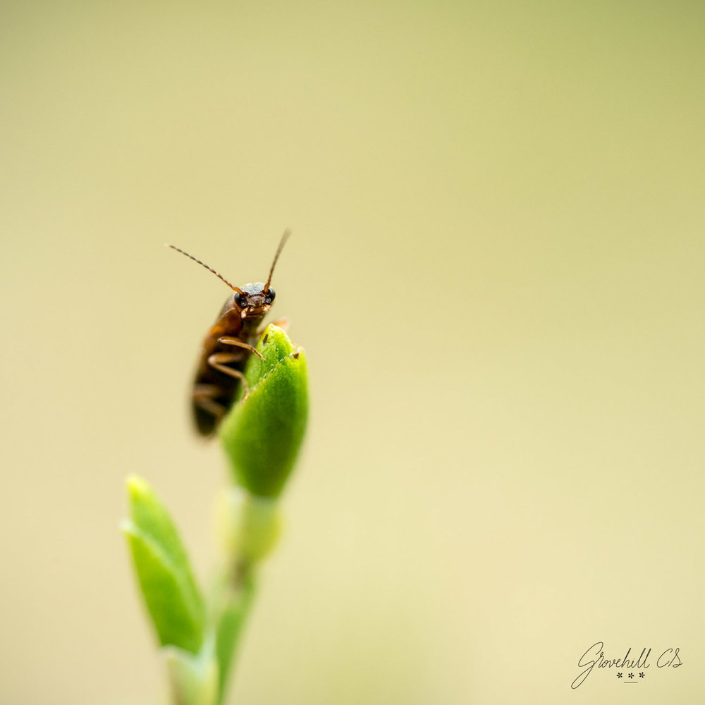 Cute    Insect Photography