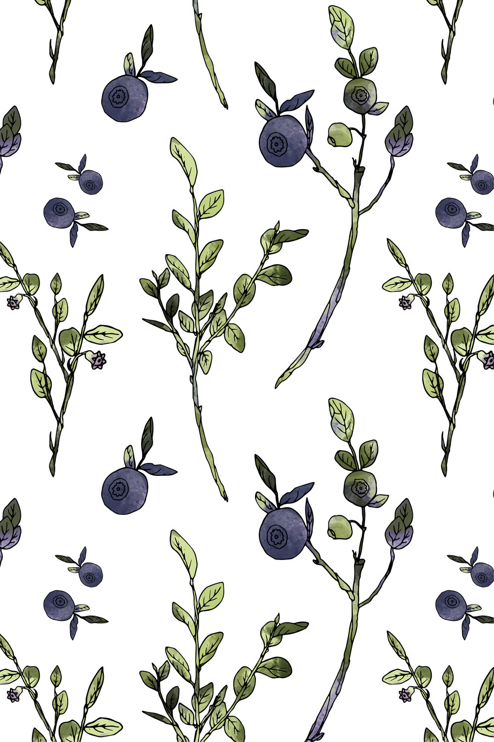 Bilberry   Original bilberry illustration - Hand drawn, Coloring with custom brush created with Adobe capture, Final pattern - Adobe Illustrator.