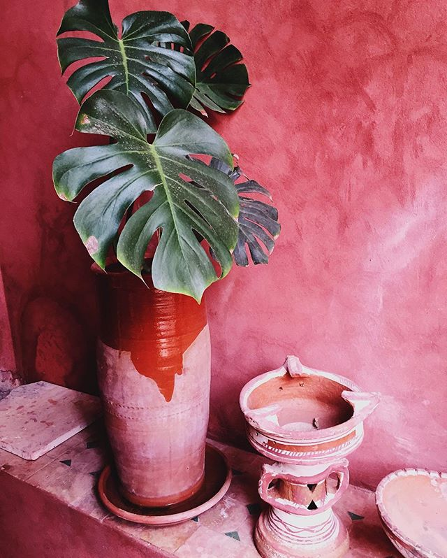 Colour inspiration for our next upcoming project 🍃Watch this space 🙌🏼 ** #colour #minimalism #minimal #vscogood #vscomood #vsco #vscocam #marrakech #graphicdesign #alfreddesign #graphic #plant #ourmoodydays #moodyports #justgoshoot