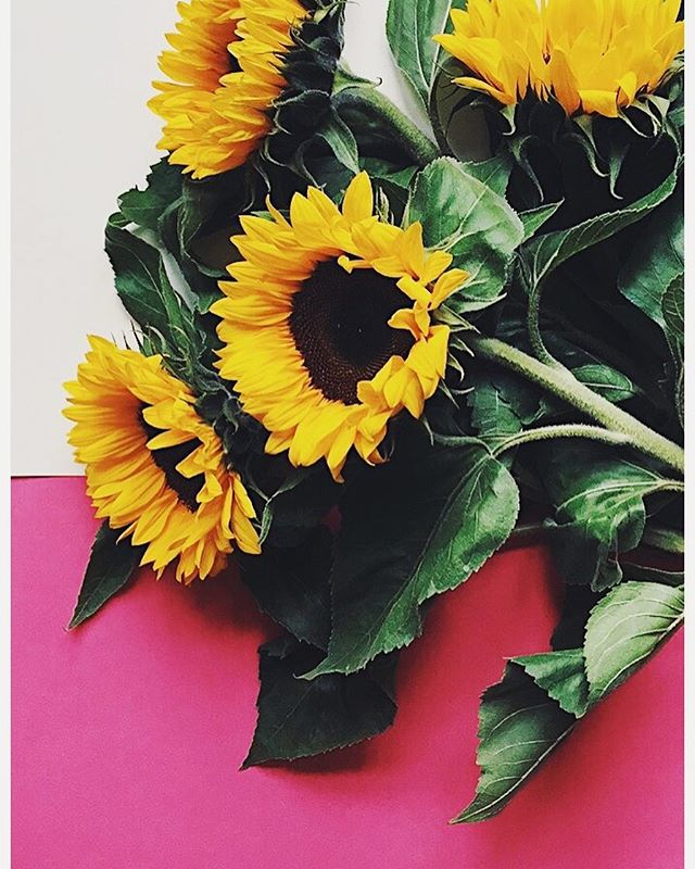 fun day shooting 🌻📸 • #design #photography #flowers #alfreddesign #vsco #vscocam #sunflower #work #ourmoodydays #minimal #colours #light #mood