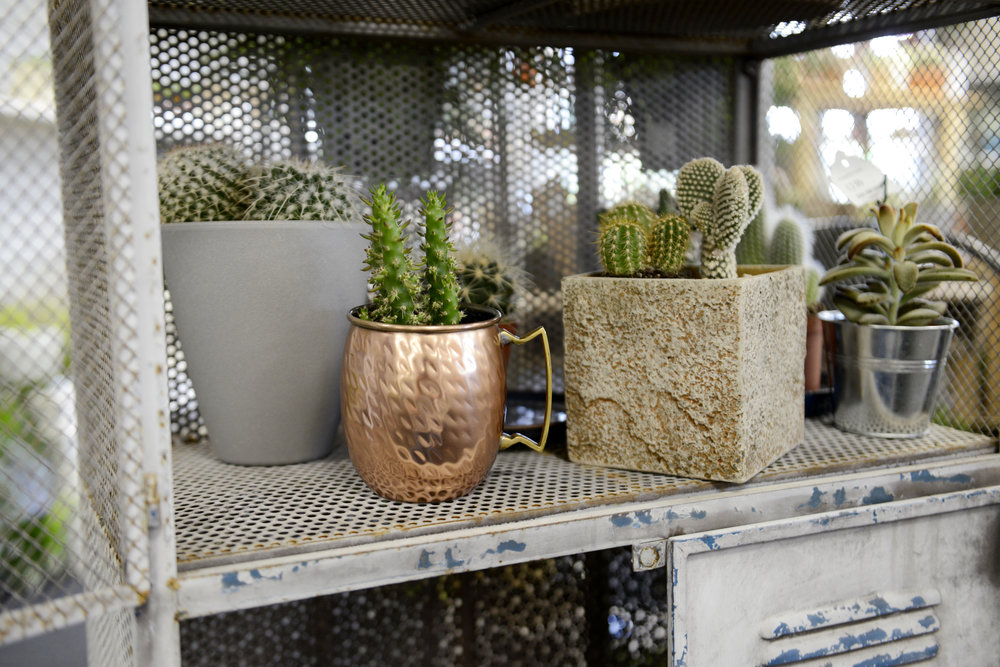Welcome to theUrban Jungle - I love the elements of this industrial botanical style in our house plant area. The distressed metal, weathered wood and rustic pots gives a modern loft look 🌵