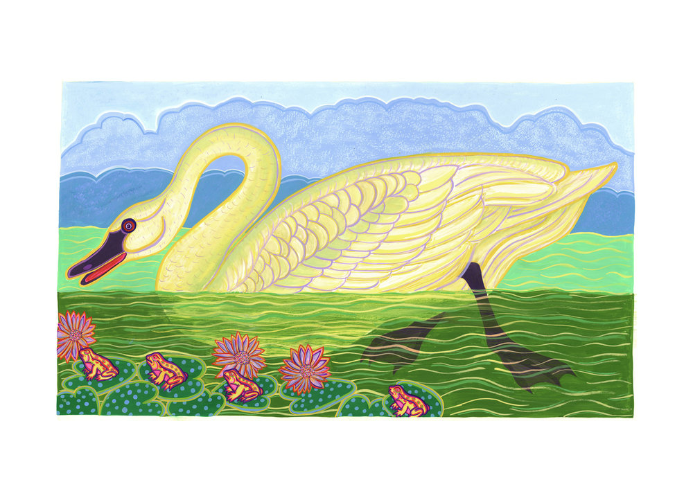 Audubon Series, American Swan