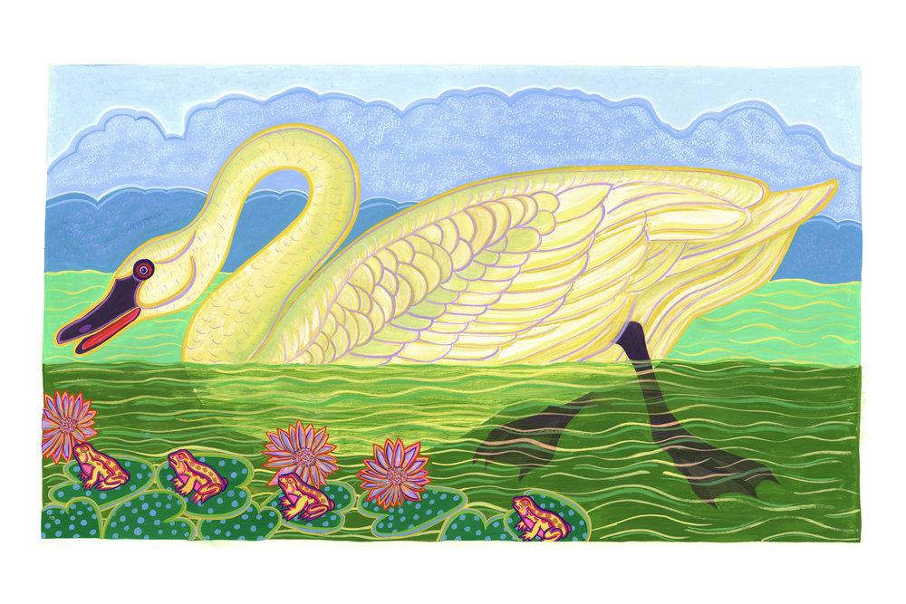 Beyond Audubon, American Swan