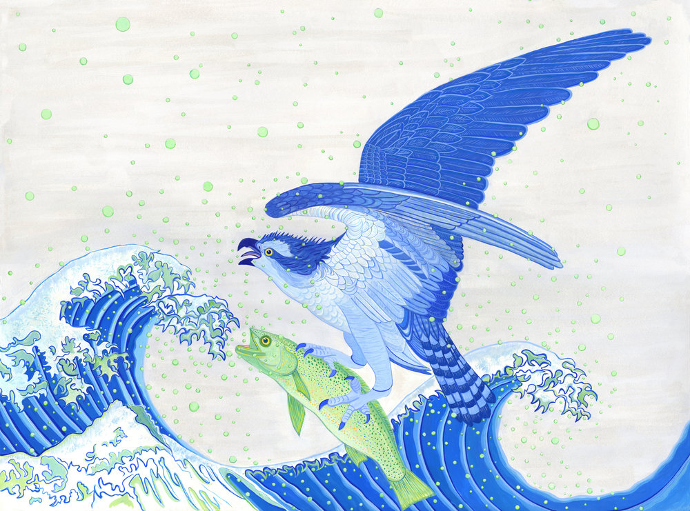 Beyond Audubon, Osprey