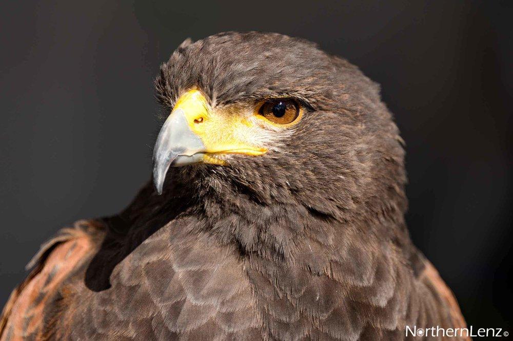 Eagle eyed  Image Ref: FF08