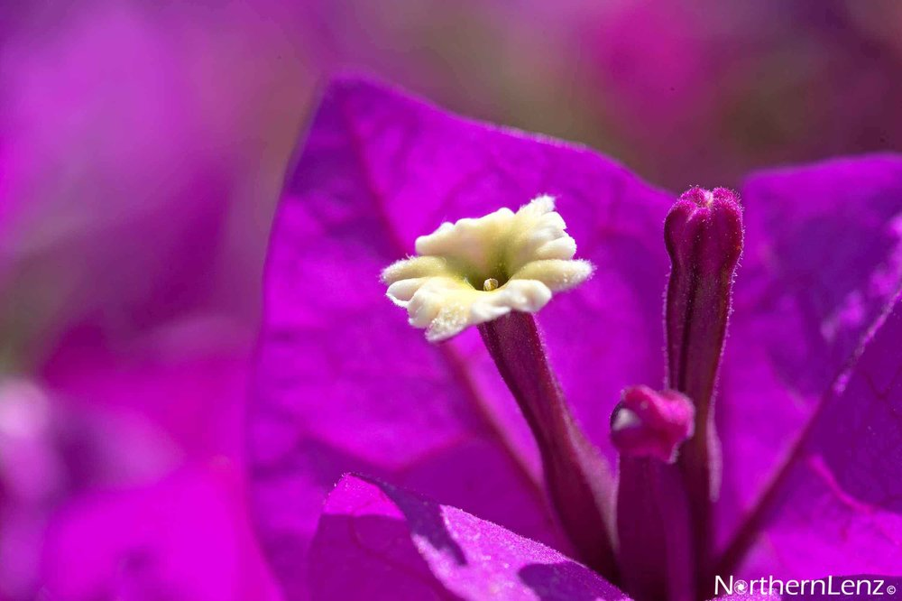 Tight on the stamen with a gorgeous purple background  Image Ref: UC07