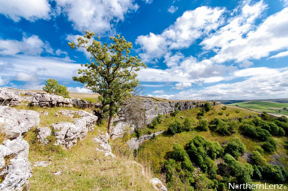 Tenacious tree standing proud on the top of Malham Cove  Image Ref: LD04