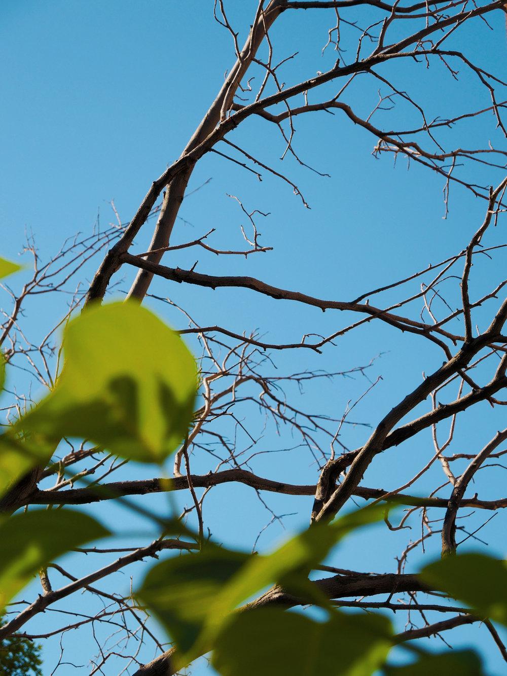 branchleaves2.jpg