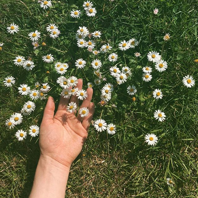 hand in daisys