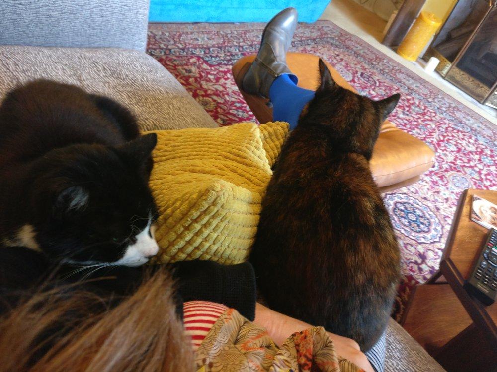 debbiedoodah cats