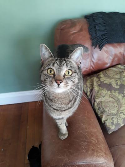 Rosie's cat companion