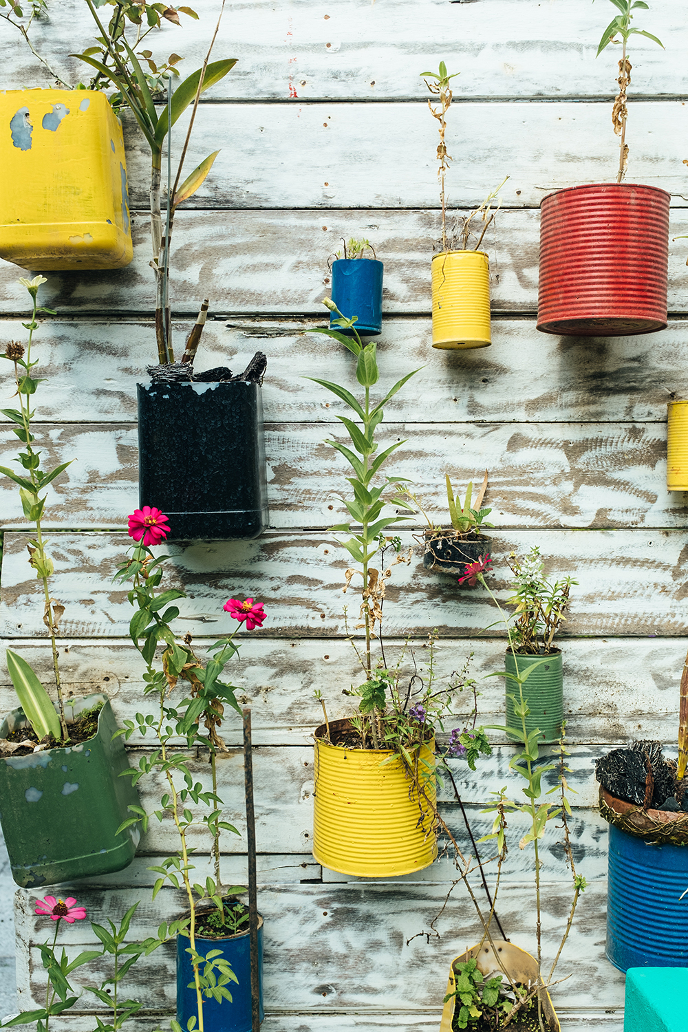 recycled tin can planter wall