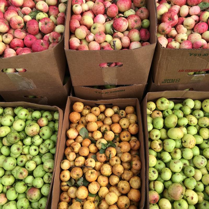 NY-Ciders-Catskills-Feral-Apples-Dan-P-story.jpg