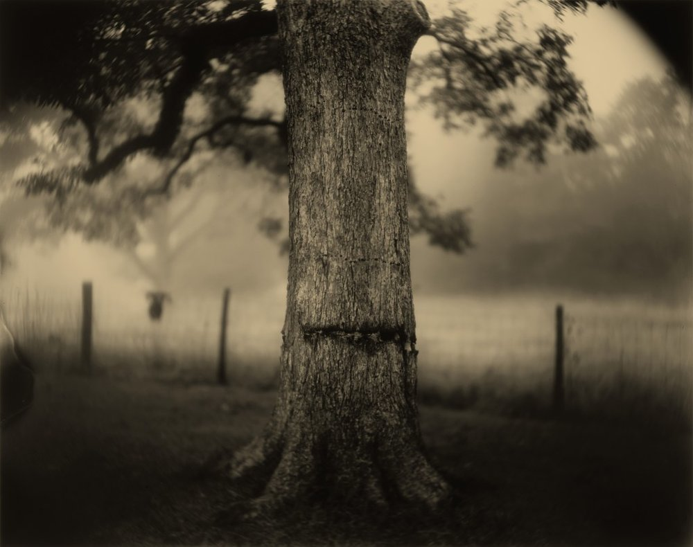 Sally Mann (American, born 1951) Deep South, Untitled (Scarred Tree), 1998, gelatin silver print, National Gallery of Art, Washington, Alfred H. Moses and Fern M. Schad Fund. Image © Sally Mann.